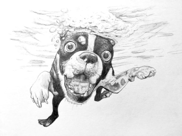 illustrations dog dessin drawing draw