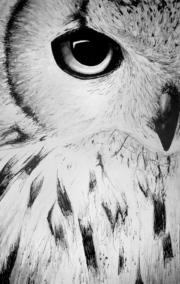 illustrations hibou dessin drawing