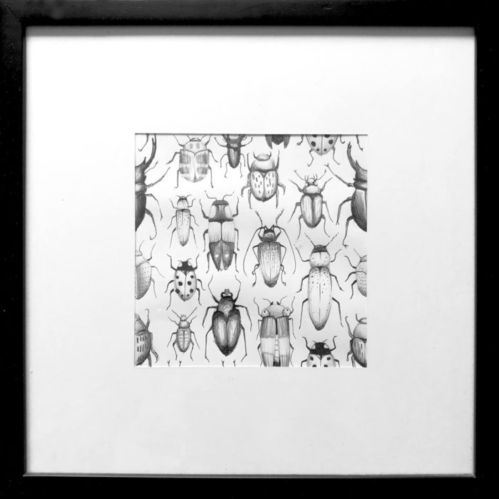 illustrations insectes dessin drawing draw