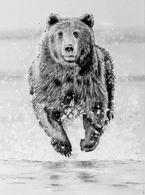 illustrations bear dessin drawing draw